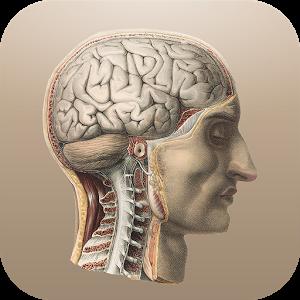 Классическая анатомия